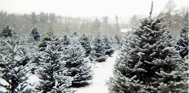 christmas-tree-farm-snowy.jpg