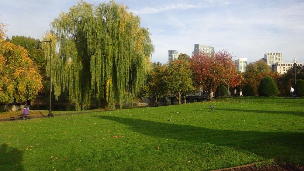 Boston gardens.jpg