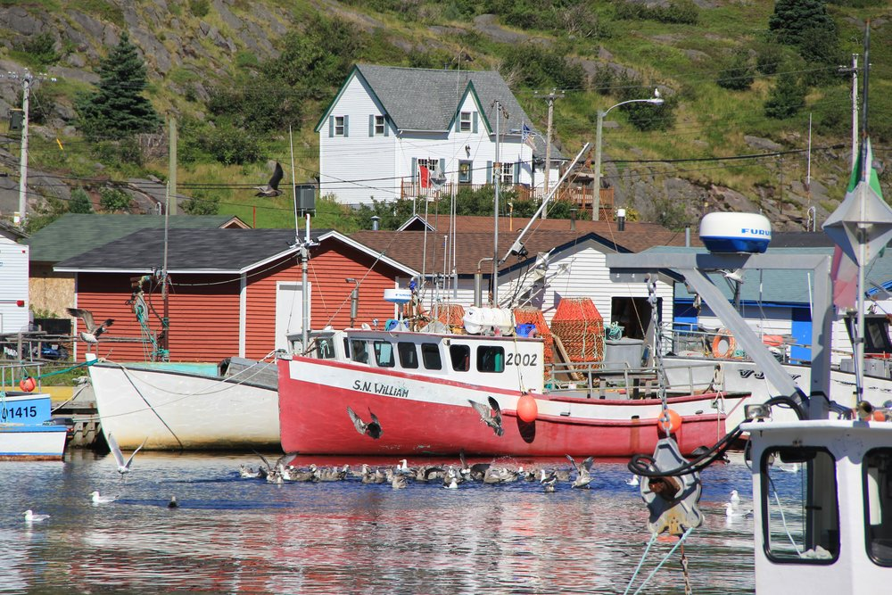 Top 10 Things to Do in Newfoundland -