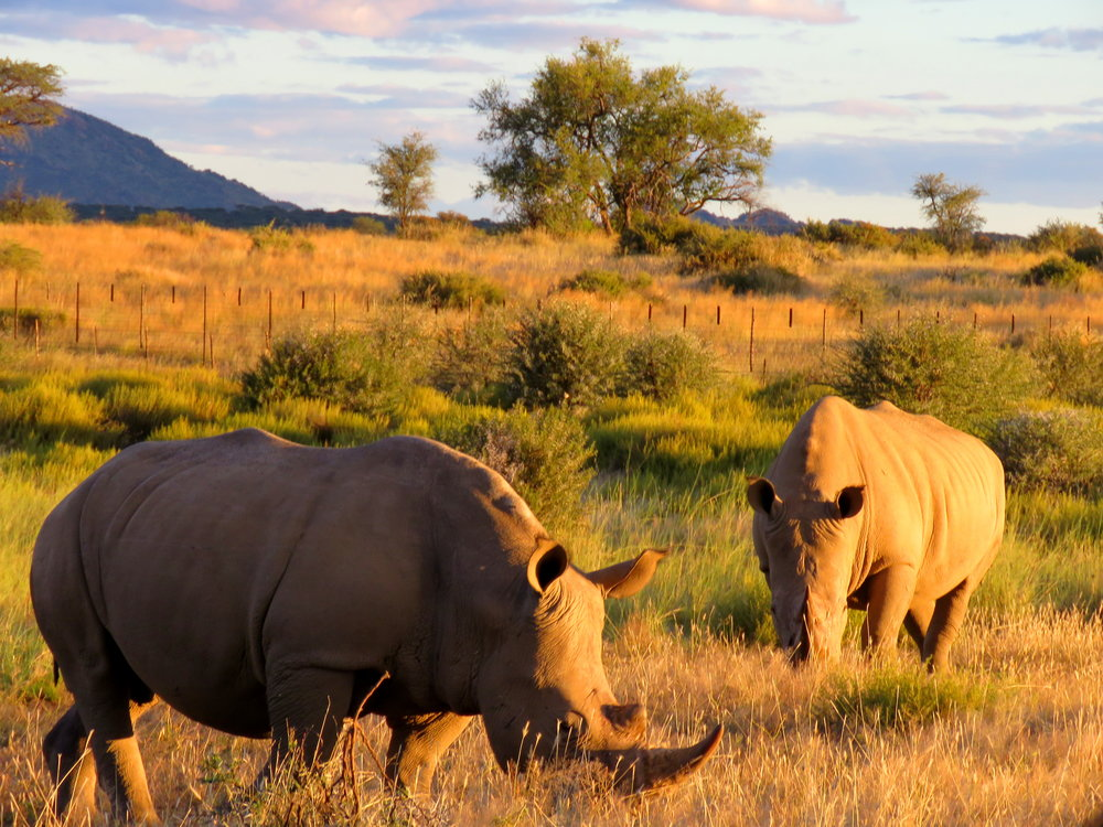 How to go on Safari in South Africa -