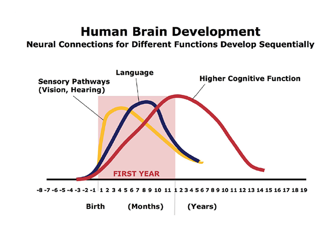 Brain Development over Time (Harvard)