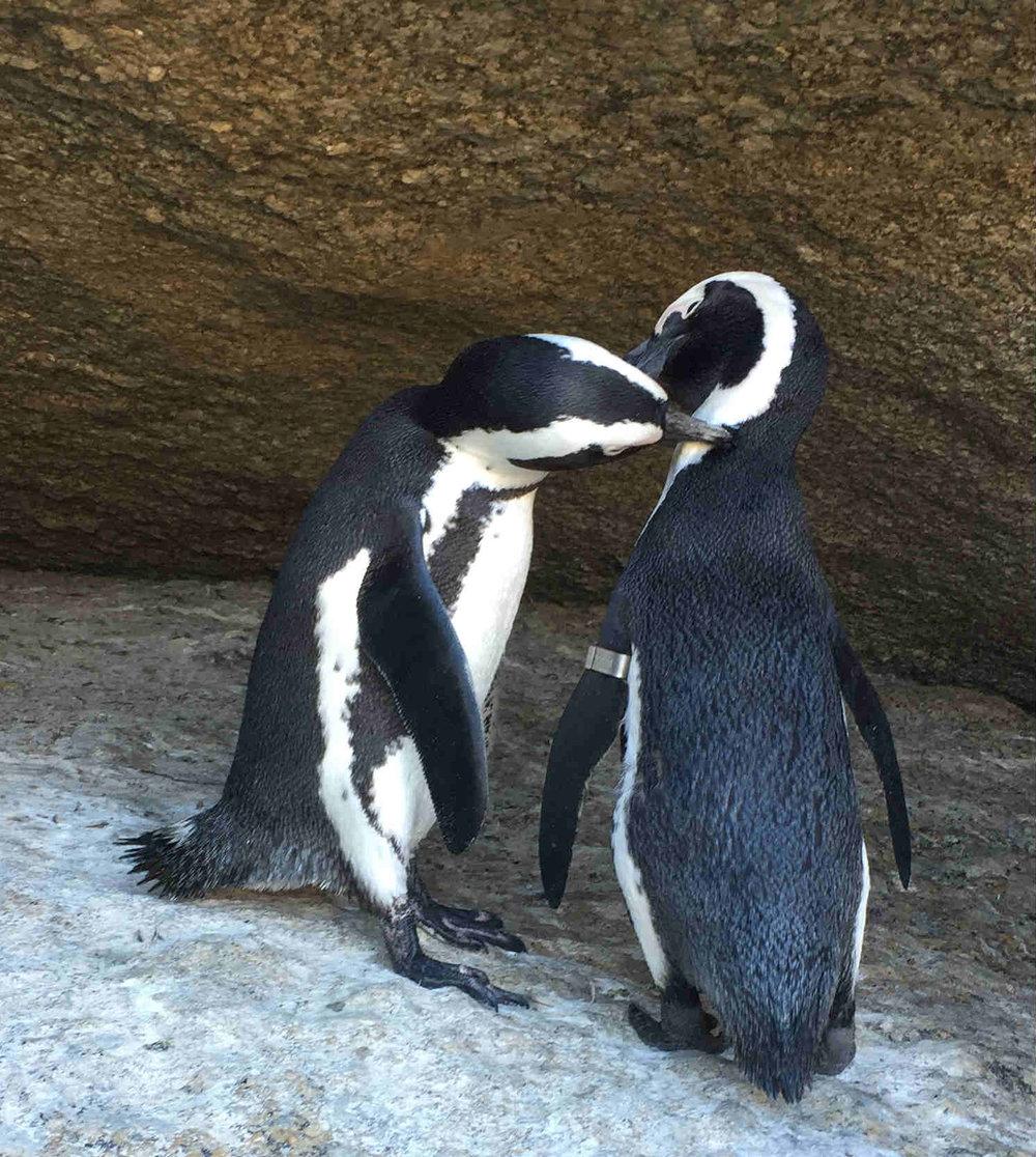 A parte da praia que é possível chegar mais perto dos pinguins - Foto: Arquivo pessoal