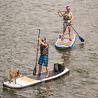 waterhouse.paddleboarders.jpg