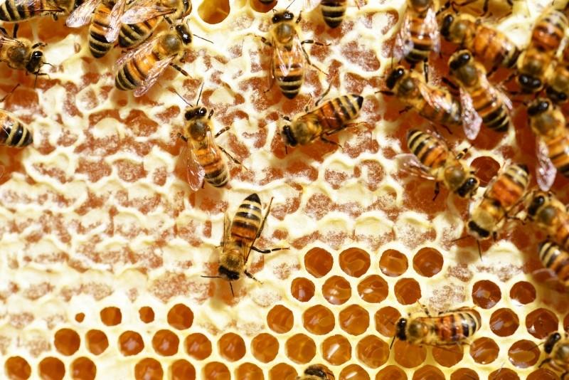 bees-honey-honey-bees-honeycomb-combs-beehive.jpg