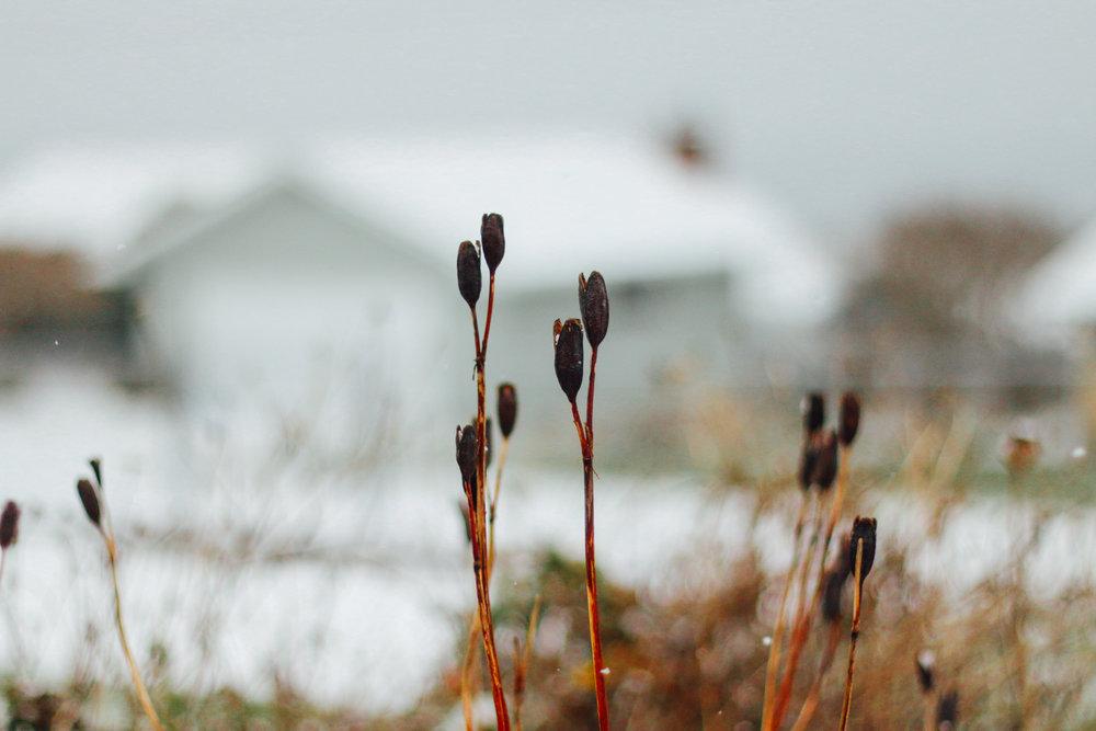 snowy-14.jpg
