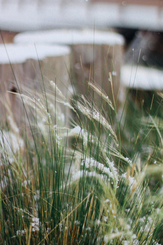 snowy-18.jpg