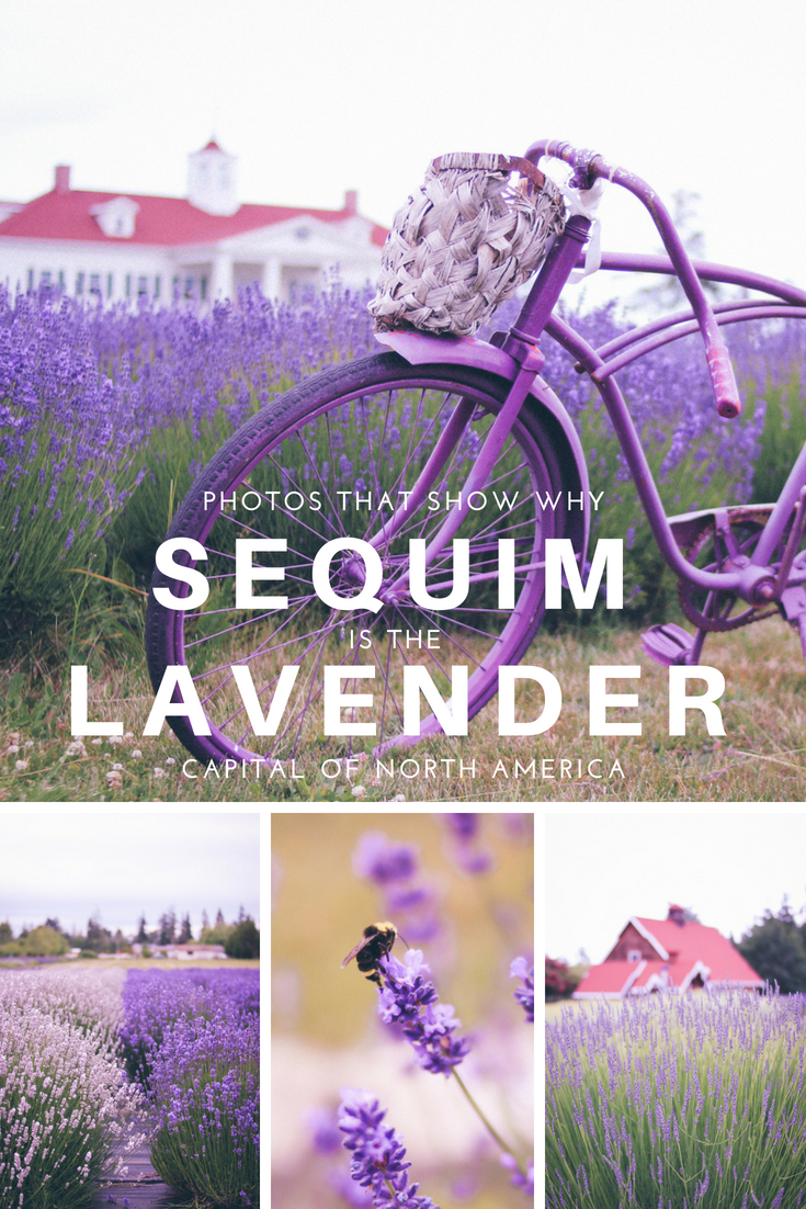 Photos That Show Why Sequim is the Lavender Capital of North America