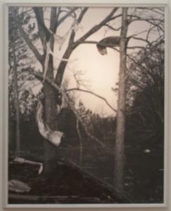 Tornado Tree #3 (1986)