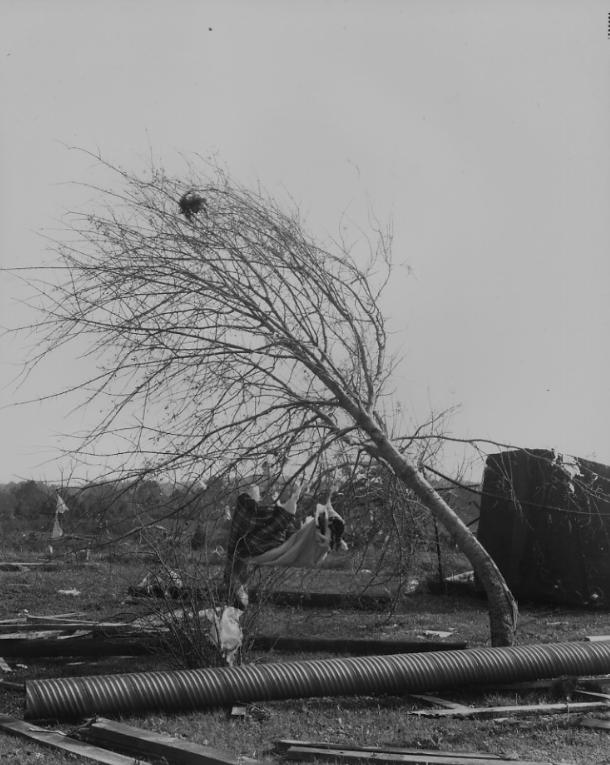 Tornado Tree #1 (1986)