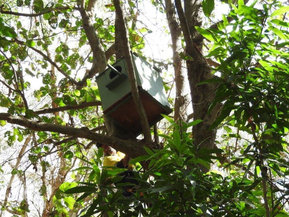 Owl Boxes RR 1 Aug 17  (5).jpg