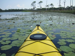 kayaking fl.jpg