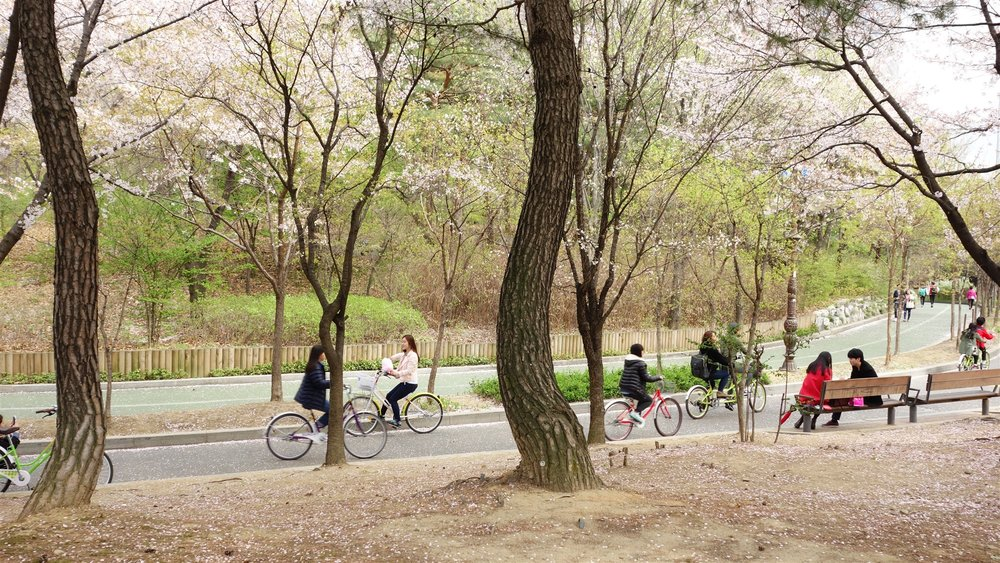 Yeouido_Park_Bicycles,_Seoul.jpg