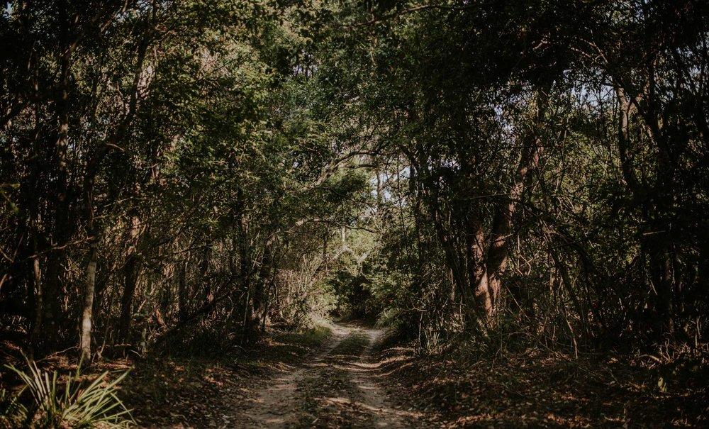 Comerong Island