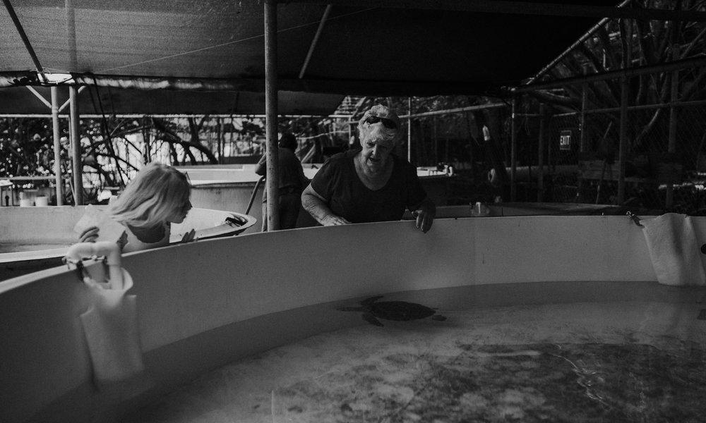 Cairns Turtle Rehabilitation Centre