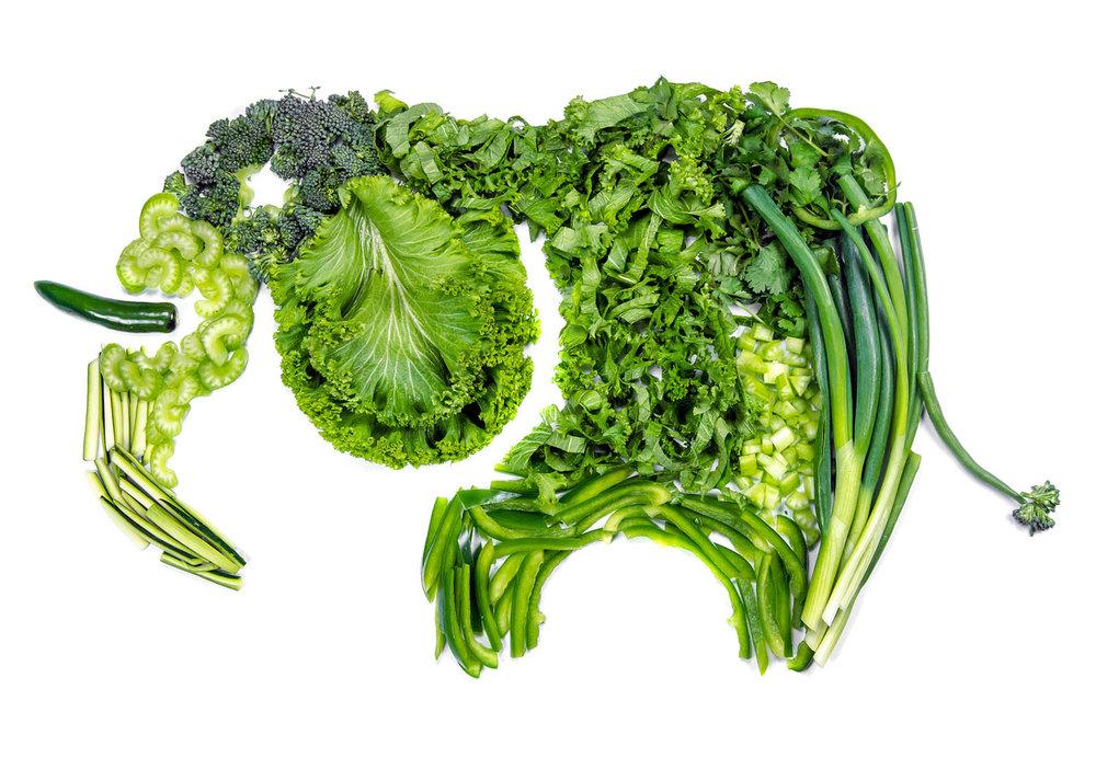 GreenElephant-full.jpg