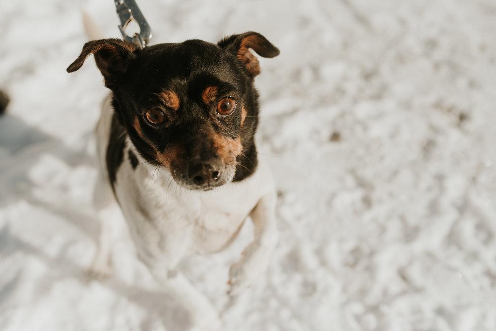 bismarck-mandan-dog-rescue-miles-of-love-48.jpg