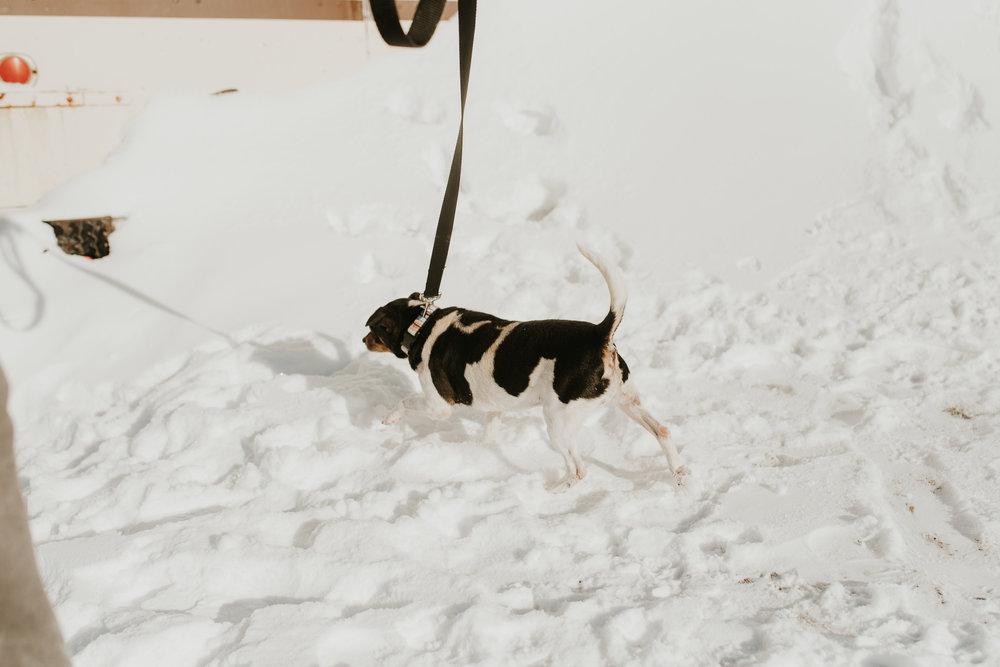 bismarck-mandan-dog-rescue-miles-of-love-47.jpg