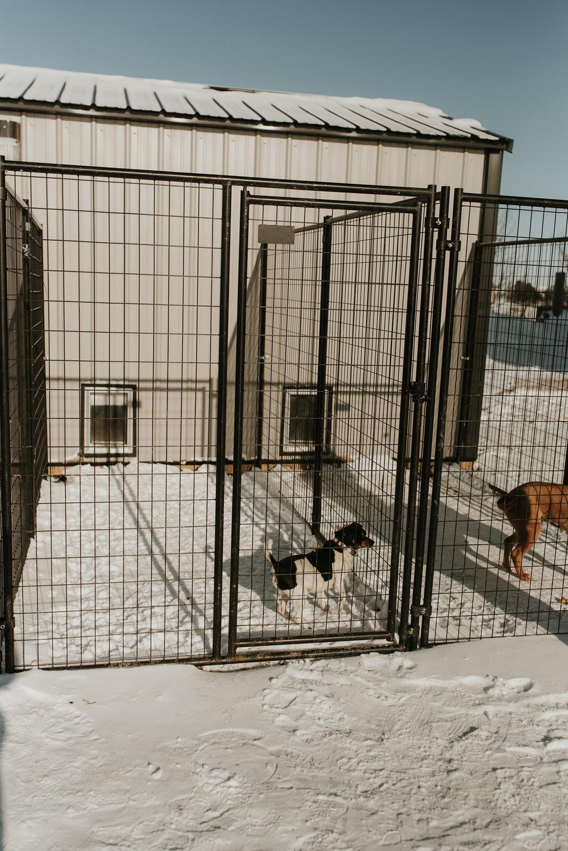 bismarck-mandan-dog-rescue-miles-of-love-51.jpg