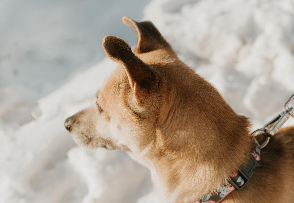 bismarck-mandan-dog-rescue-miles-of-love-57h.jpg