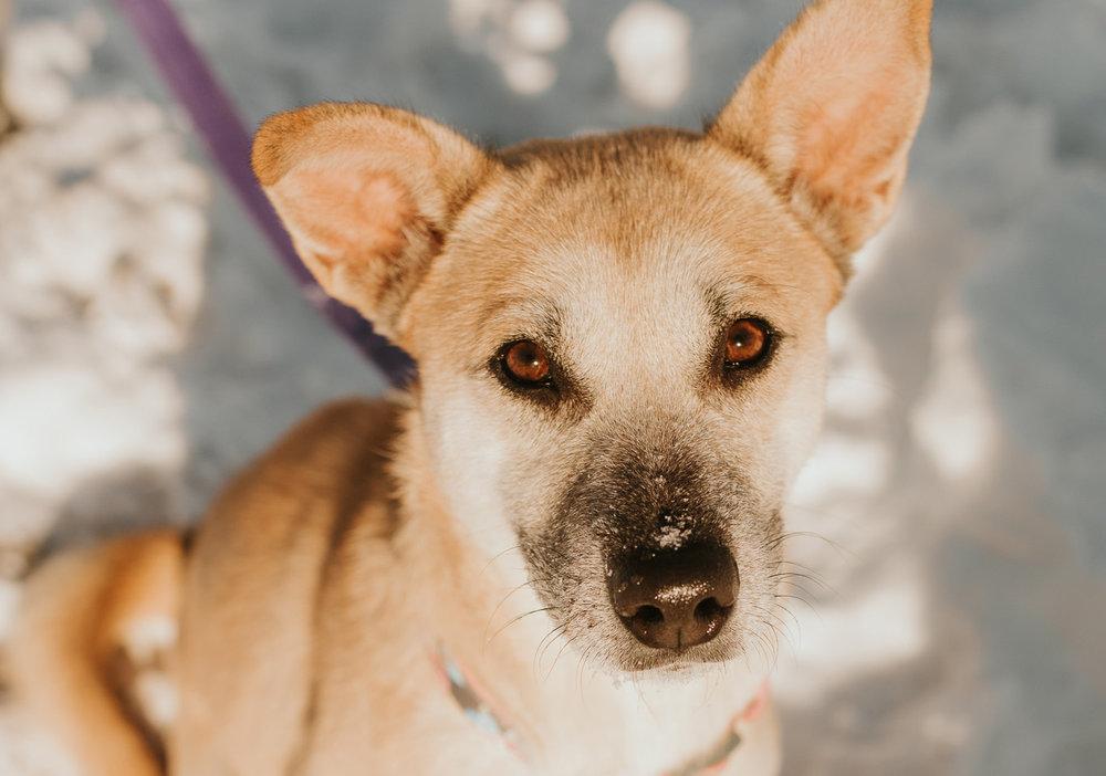 bismarck-mandan-dog-rescue-miles-of-love-62h.jpg