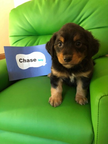 CHASE-ADOPTION PENDING