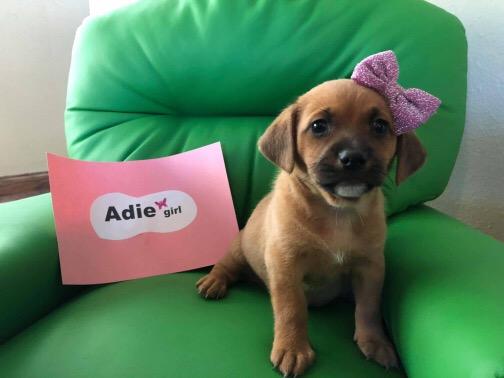 ADIE-ADOPTION PENDING