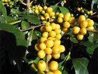 cultivar.jpg