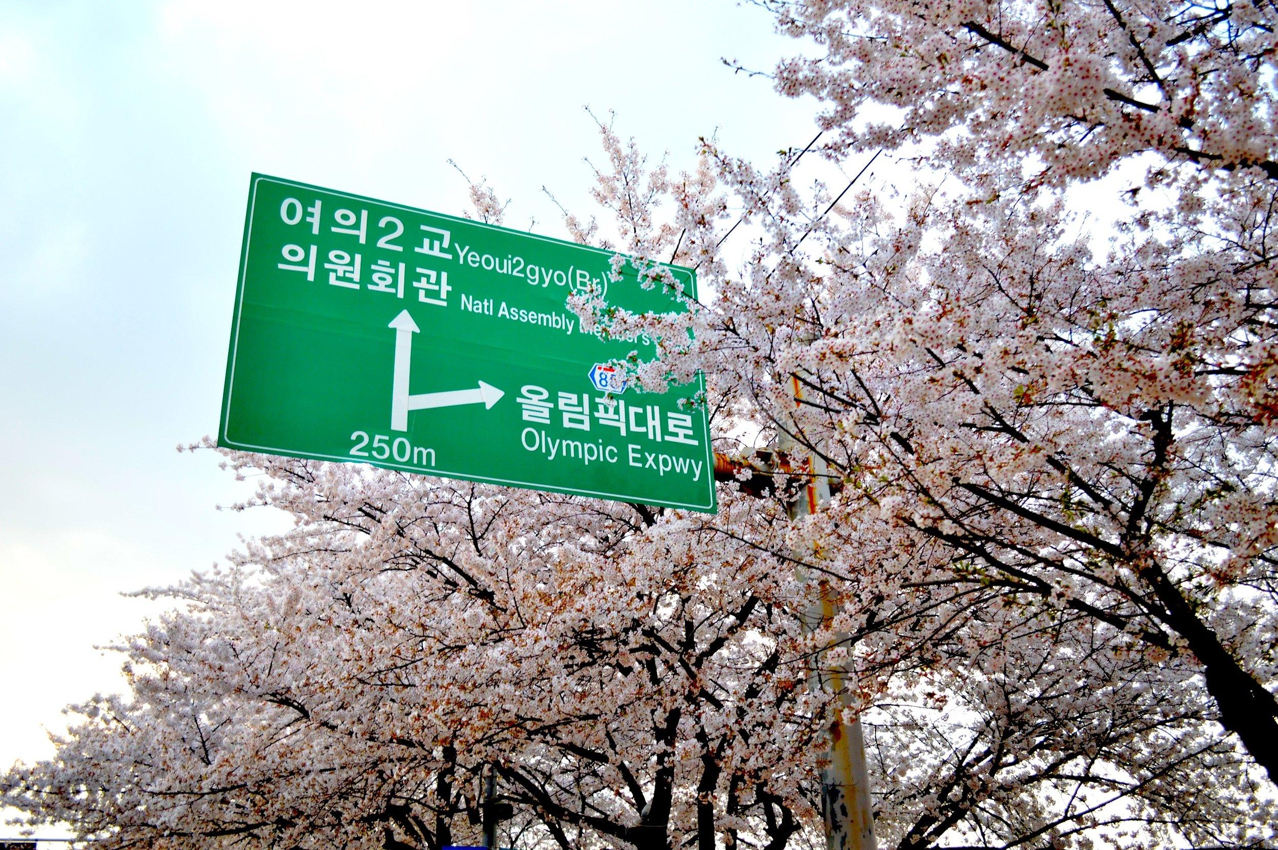 Cherry Blossoms.