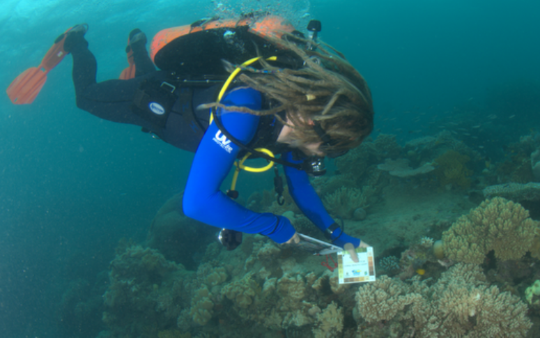 Peran Bray (RSRC) conducting a Coral Watch and Reef Health Impact Survey.