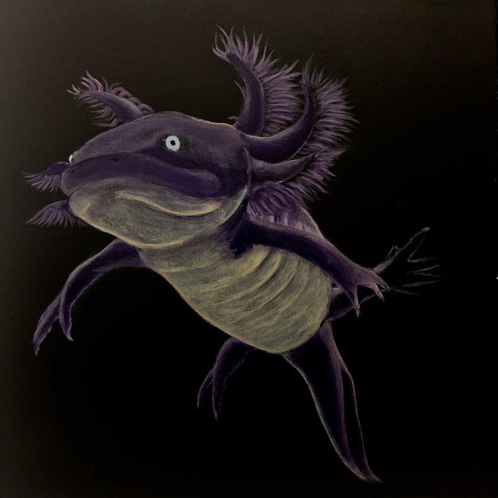Axolotl 1