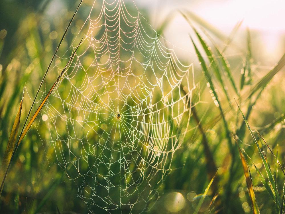 web-spider-search-marketing.jpg