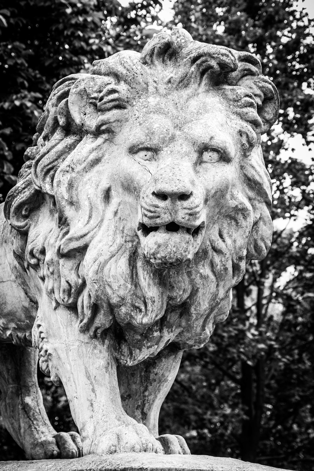 the centrepiece of The Arboretum, the lion sculpture erected in 1872