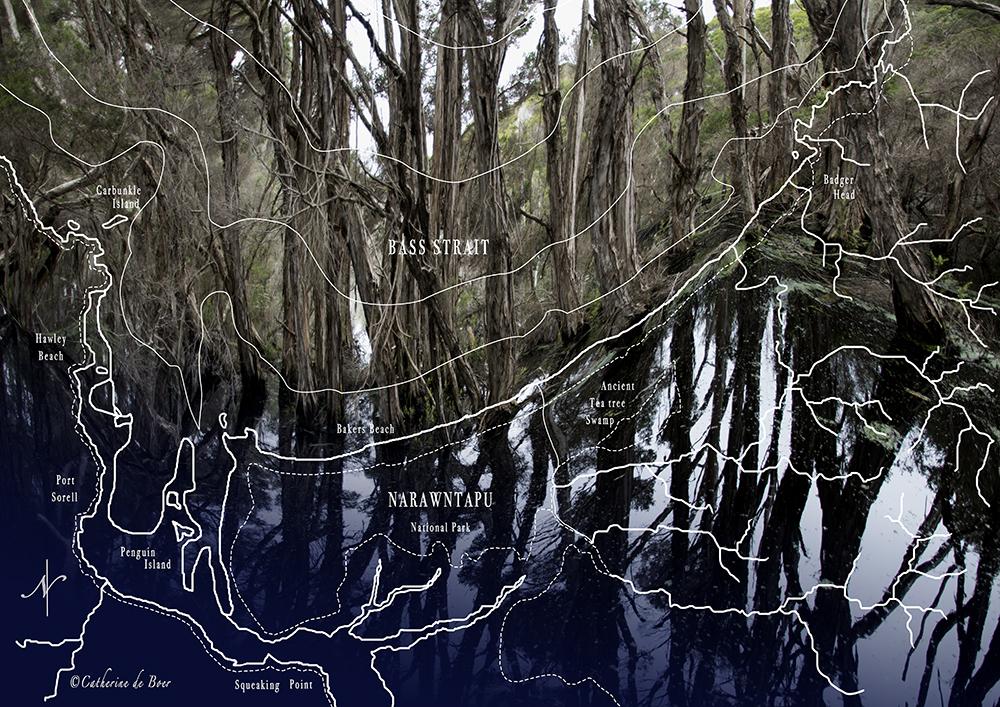 Narawntapu Swamp