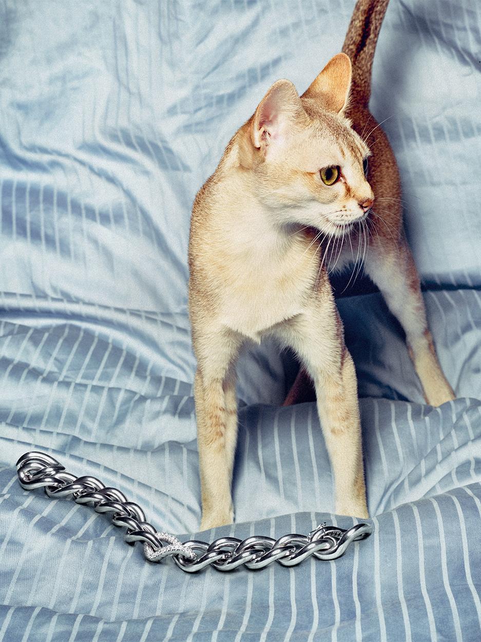 Katt PS _12.06.201670159.jpg