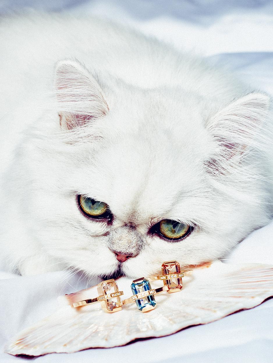 Katt_PS_70915.jpg