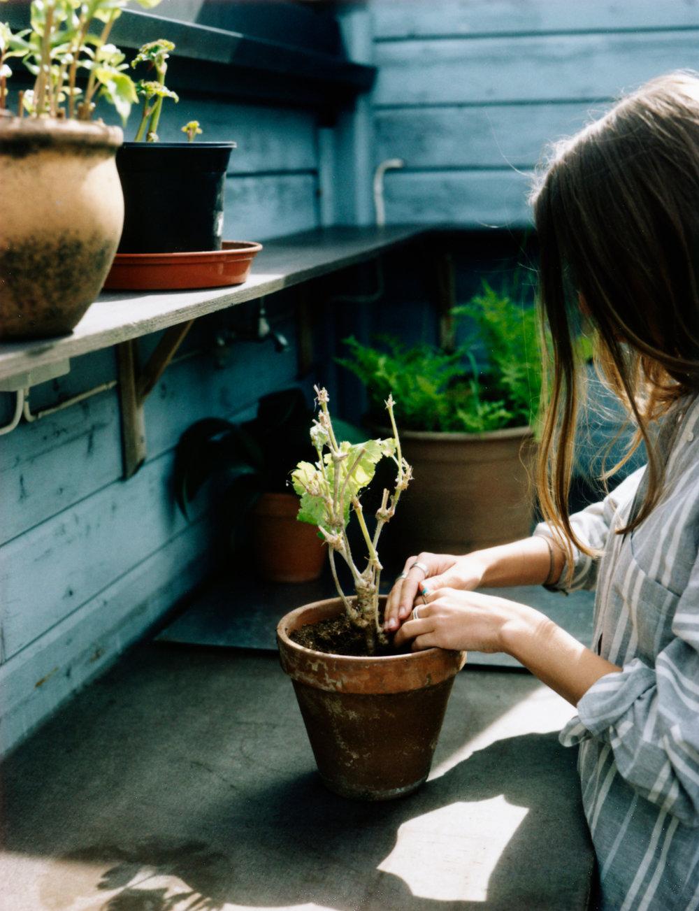 HF_planter_005.jpg