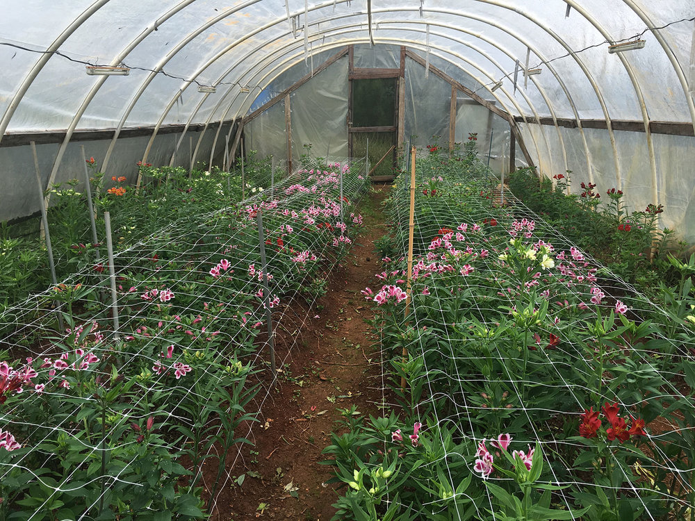 Our Greenhouses...
