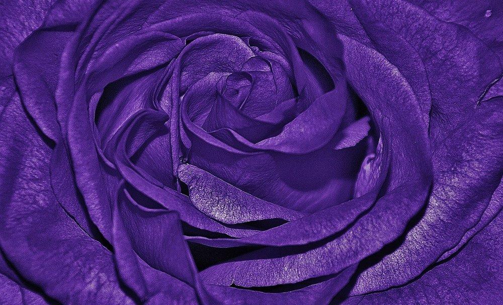 roses-320209_1280.jpg