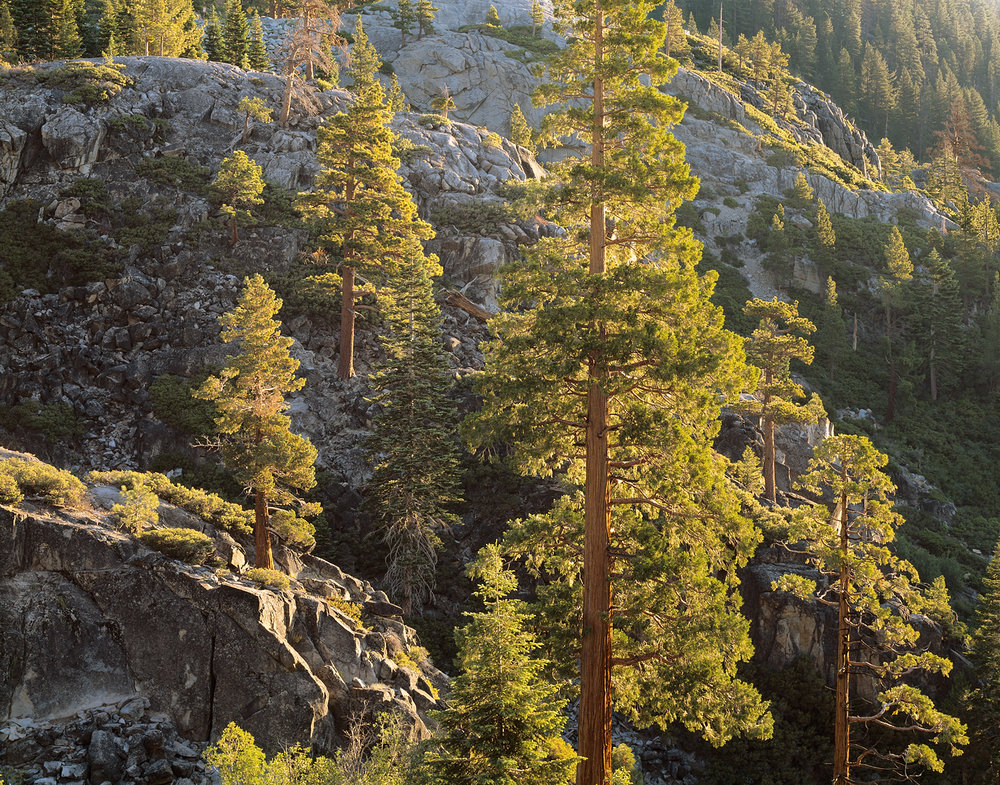 Backlit Pines and Granite, Emerald Bay, Lake Tahoe