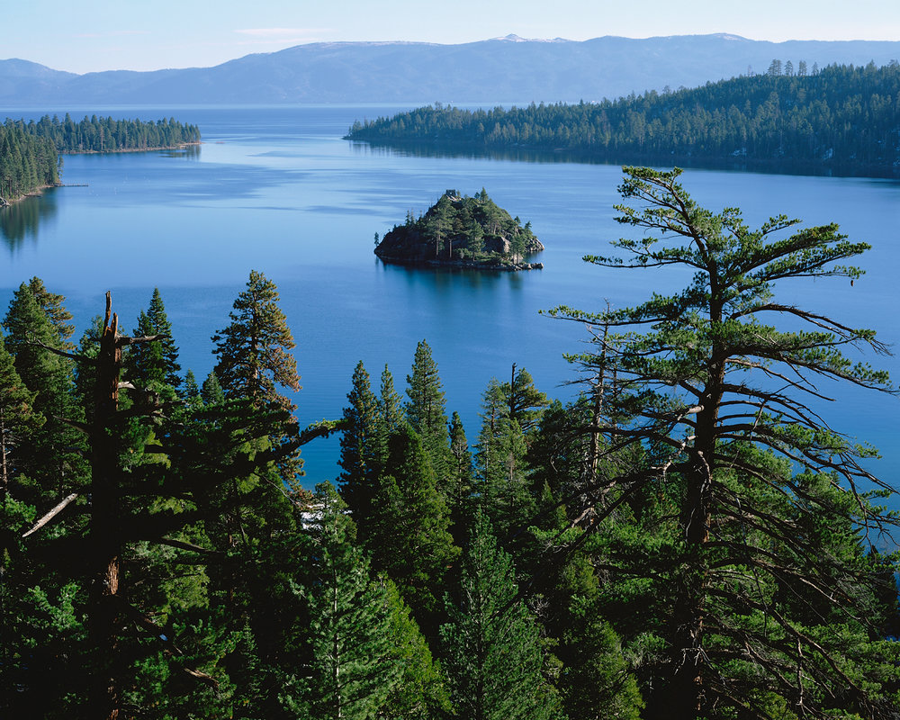 Sugar Pine, Emerald Bay, Lake Tahoe