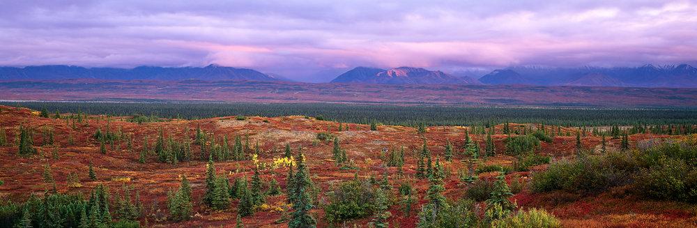 Fall Tundra, Pink Sky Panorama, Denali