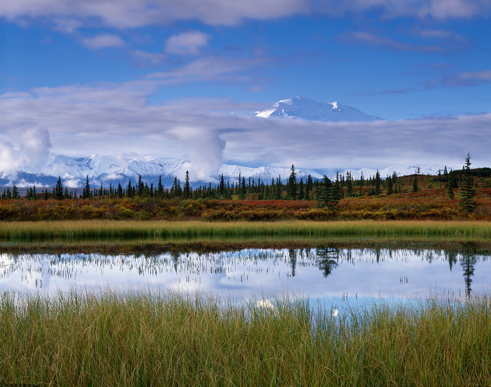 Morning, Grass and Pond, Denali