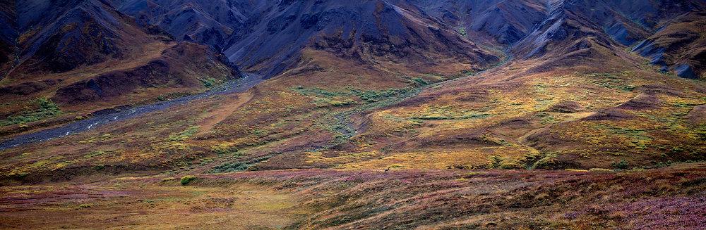 Wolf Pack Panorama, Denali