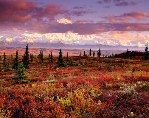 Sunset Fall Tundra Denali National Park Alaska By Large Format Landscape Photographer Jon Paul