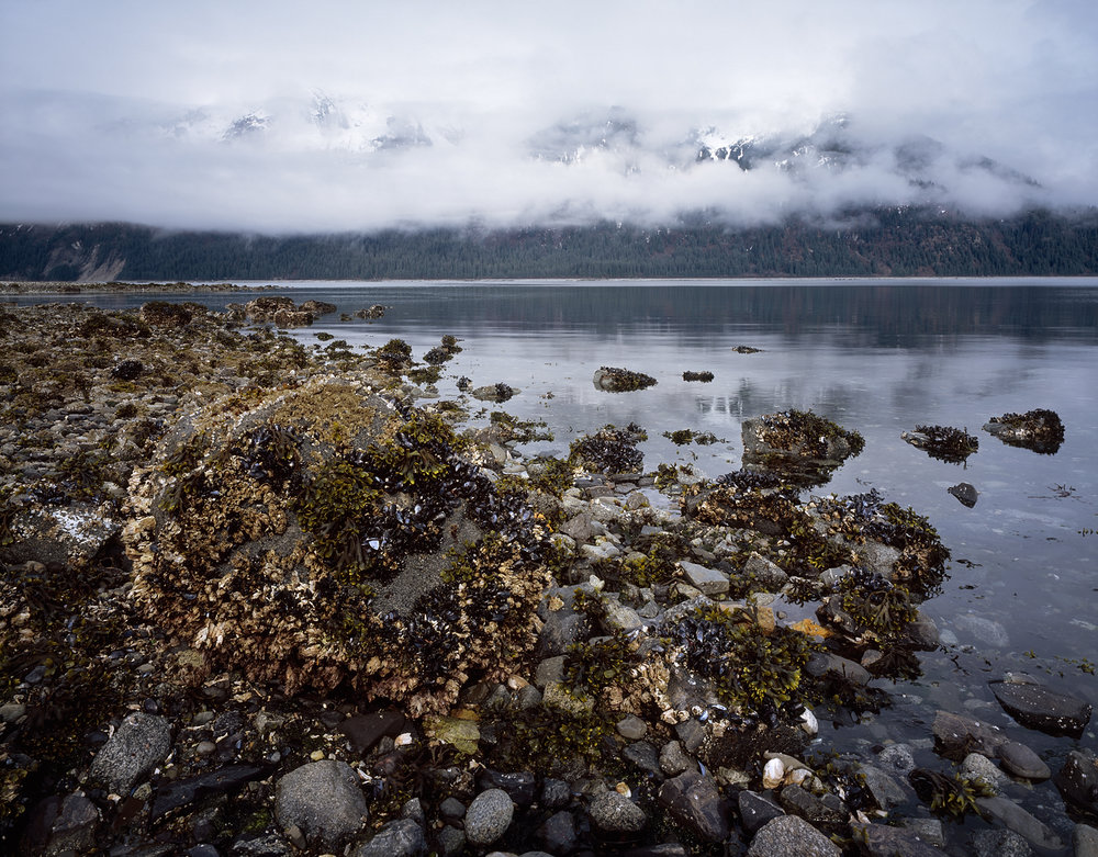 Intertidal Zone, Shrouded Mountains, Glacier Bay, Alaska
