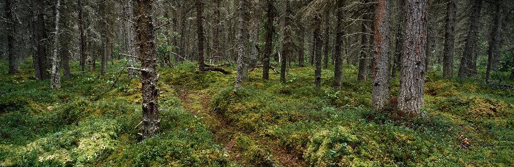 Brown Bear Trail Panorama, Alaska