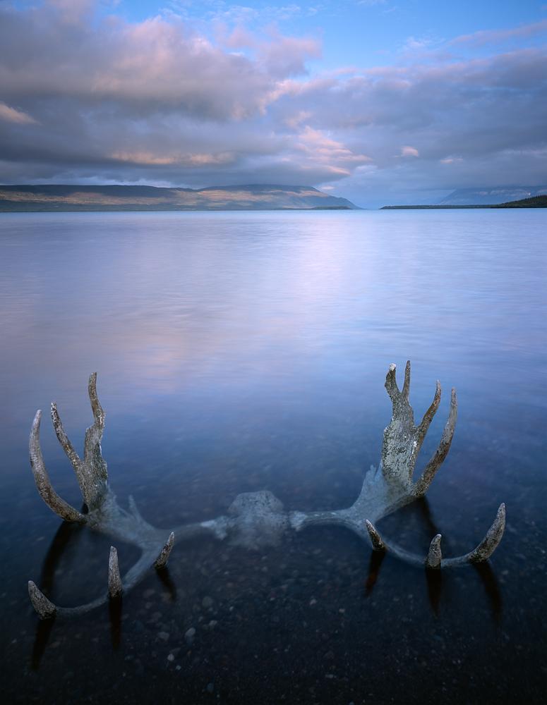 Moose Antlers, Naknek Sunset, Katmai, Alaska