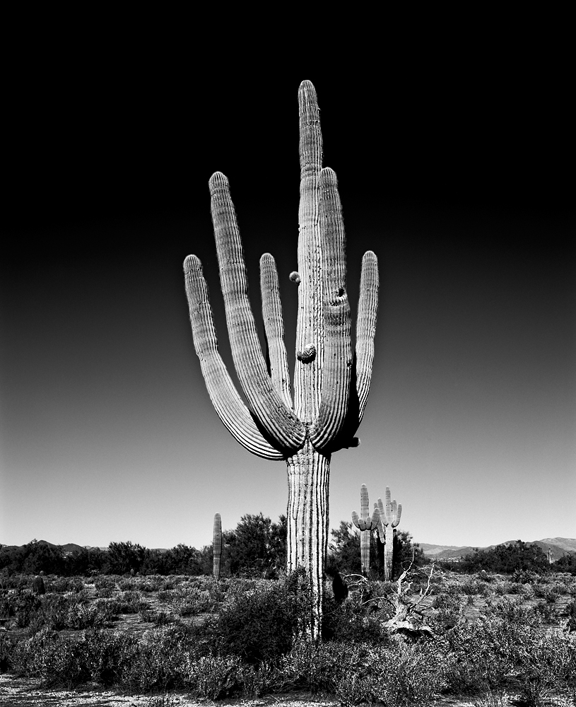 Saguaro II Black & White, Arizona