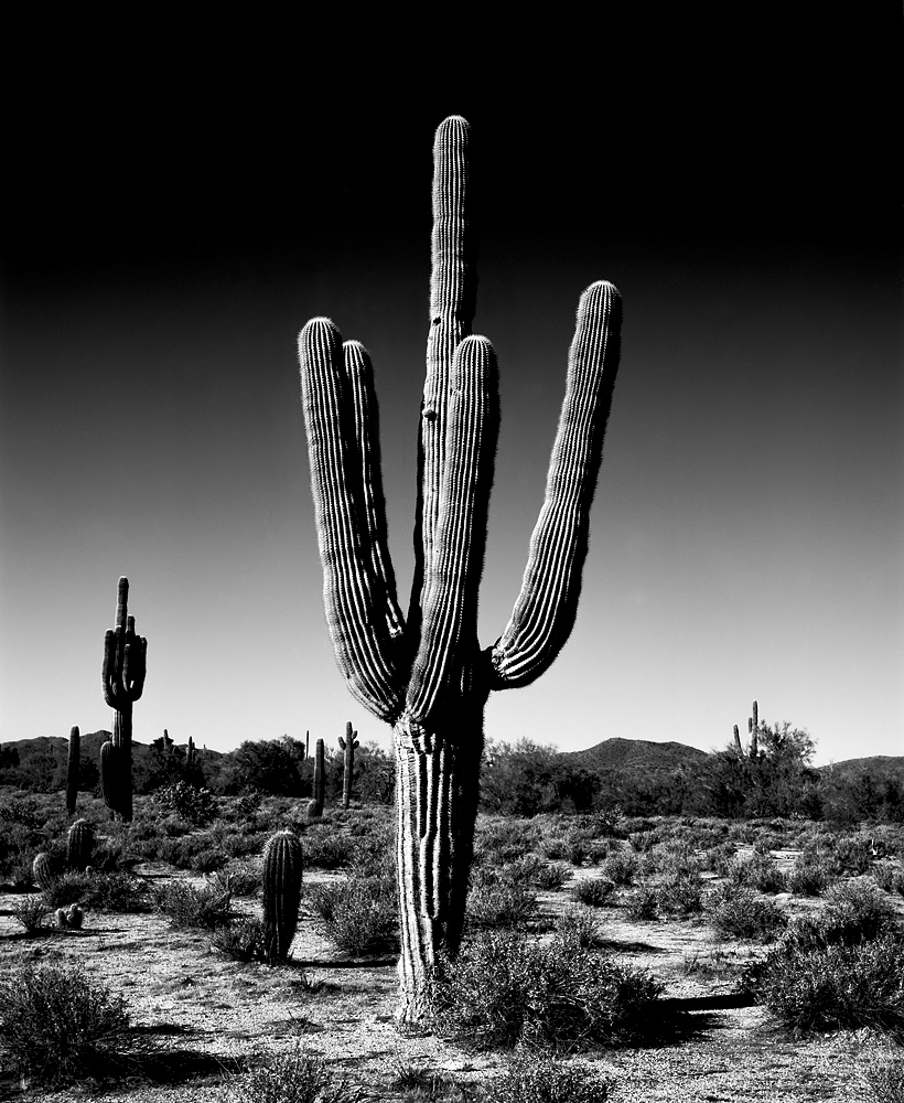 Saguaro III Black & White, Arizona