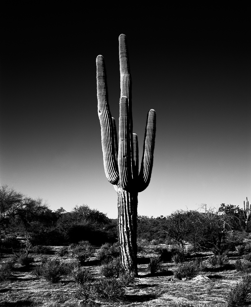Saguaro VI Black & White, Arizona
